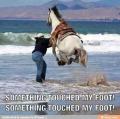 Texas-HorseJump