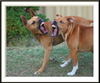 Viciousdogs